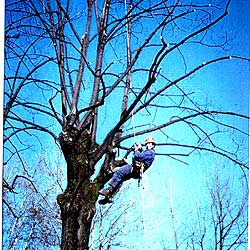 treecl-01