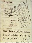 albero della vita darwin 2