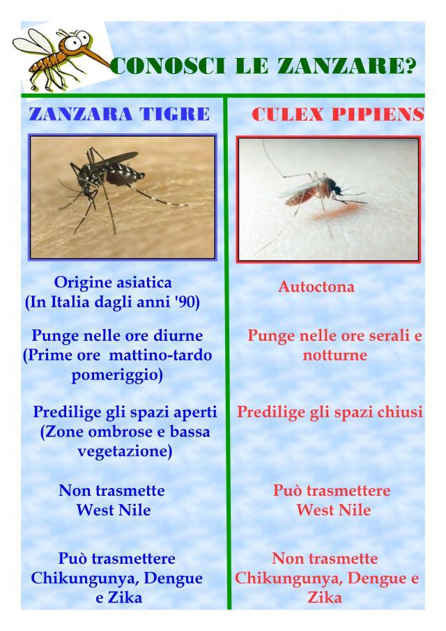 ZANZARA TIGRE VS CULEX